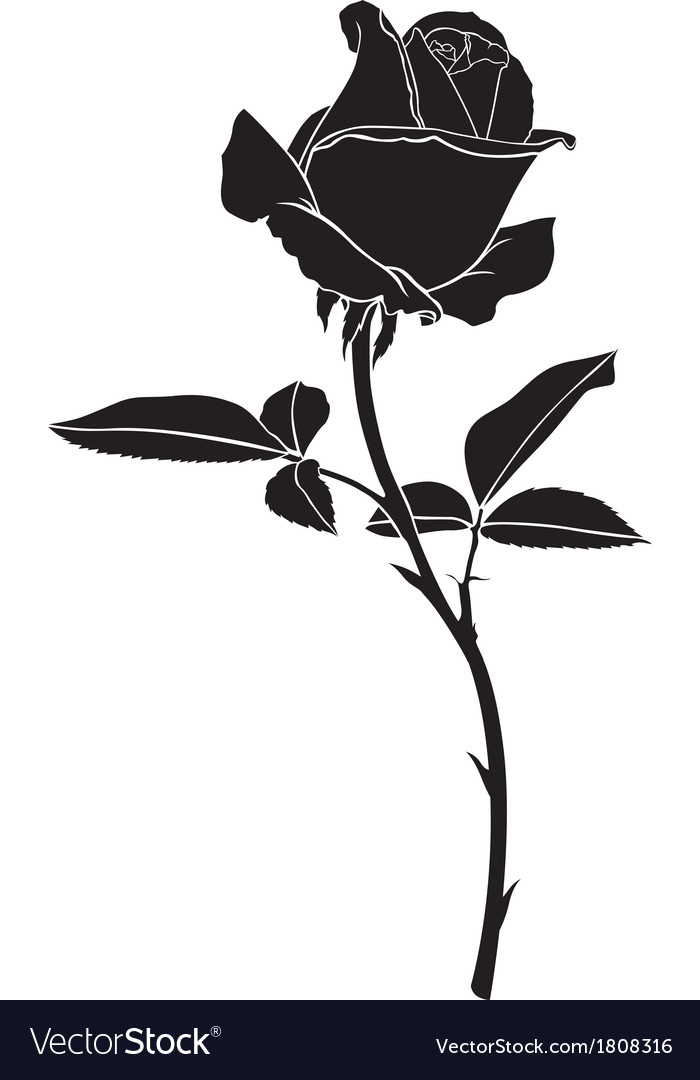 roses silhouette royalty free vector image - vectorstock