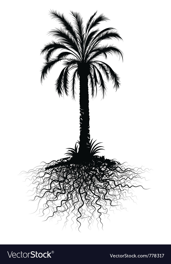 Palm tree sketch vector image