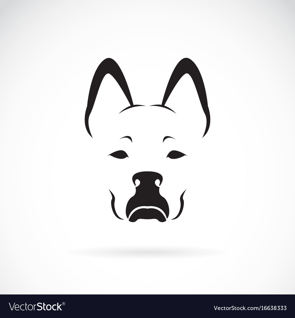 Dog face on white background pet animal vector image