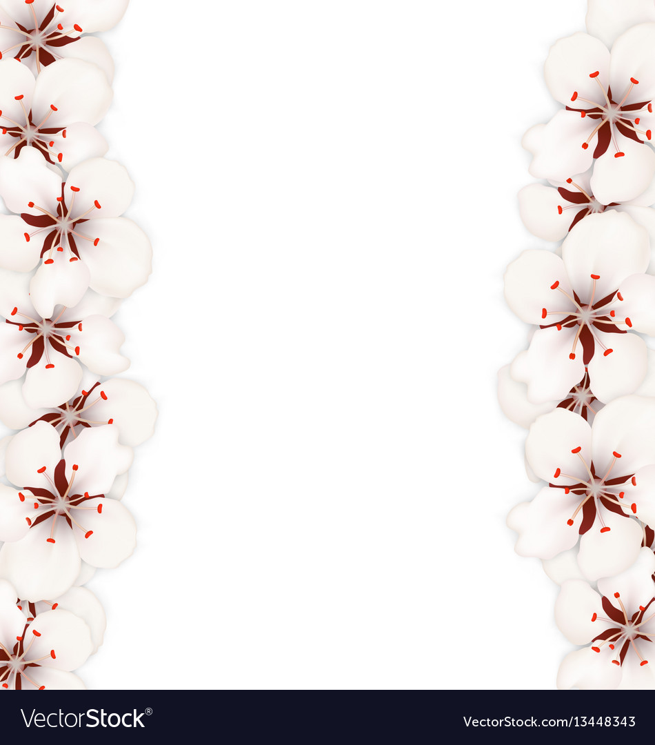 Abstract border made in cherry blossom vector image