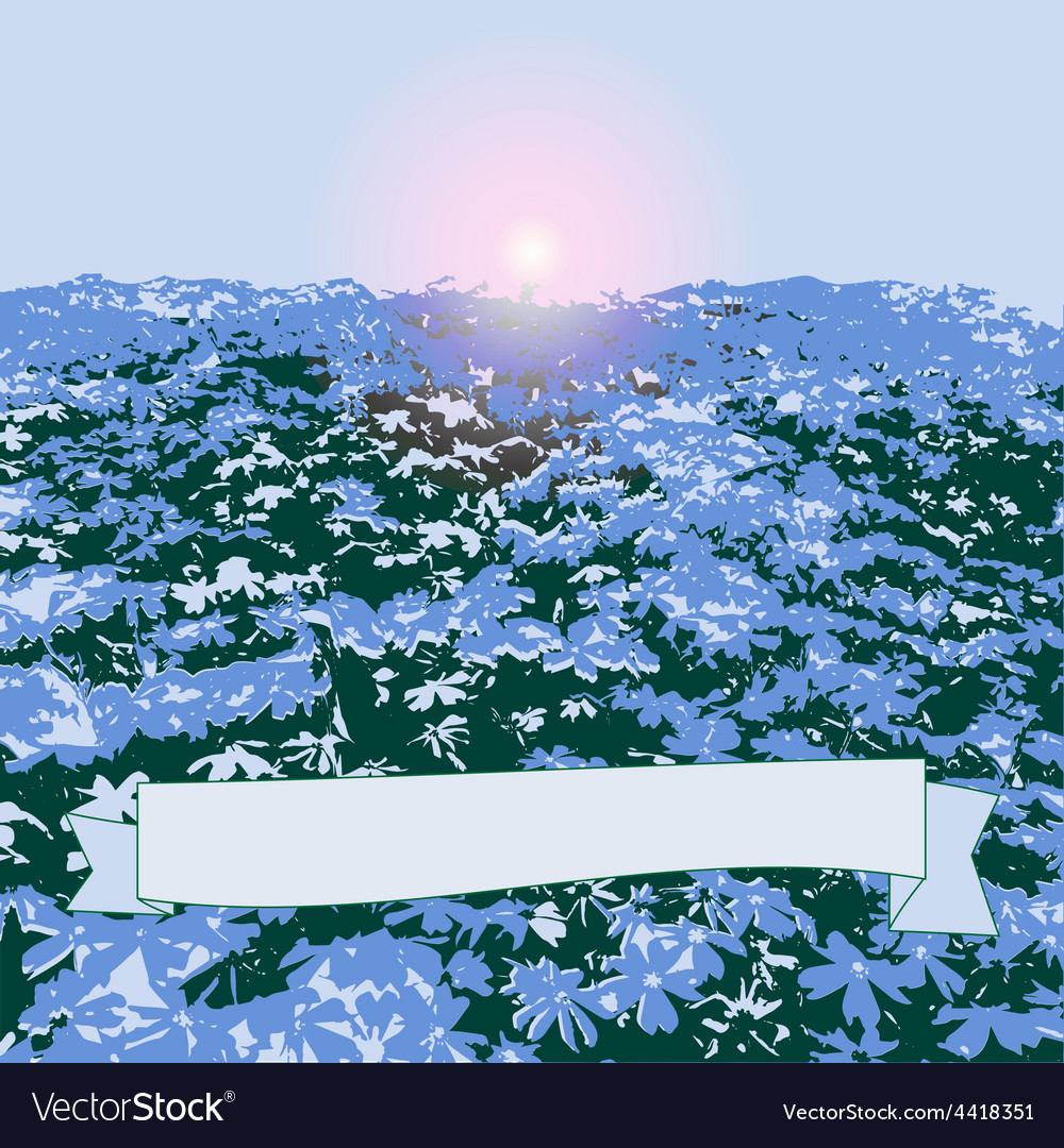 Field with blue flowers vector image