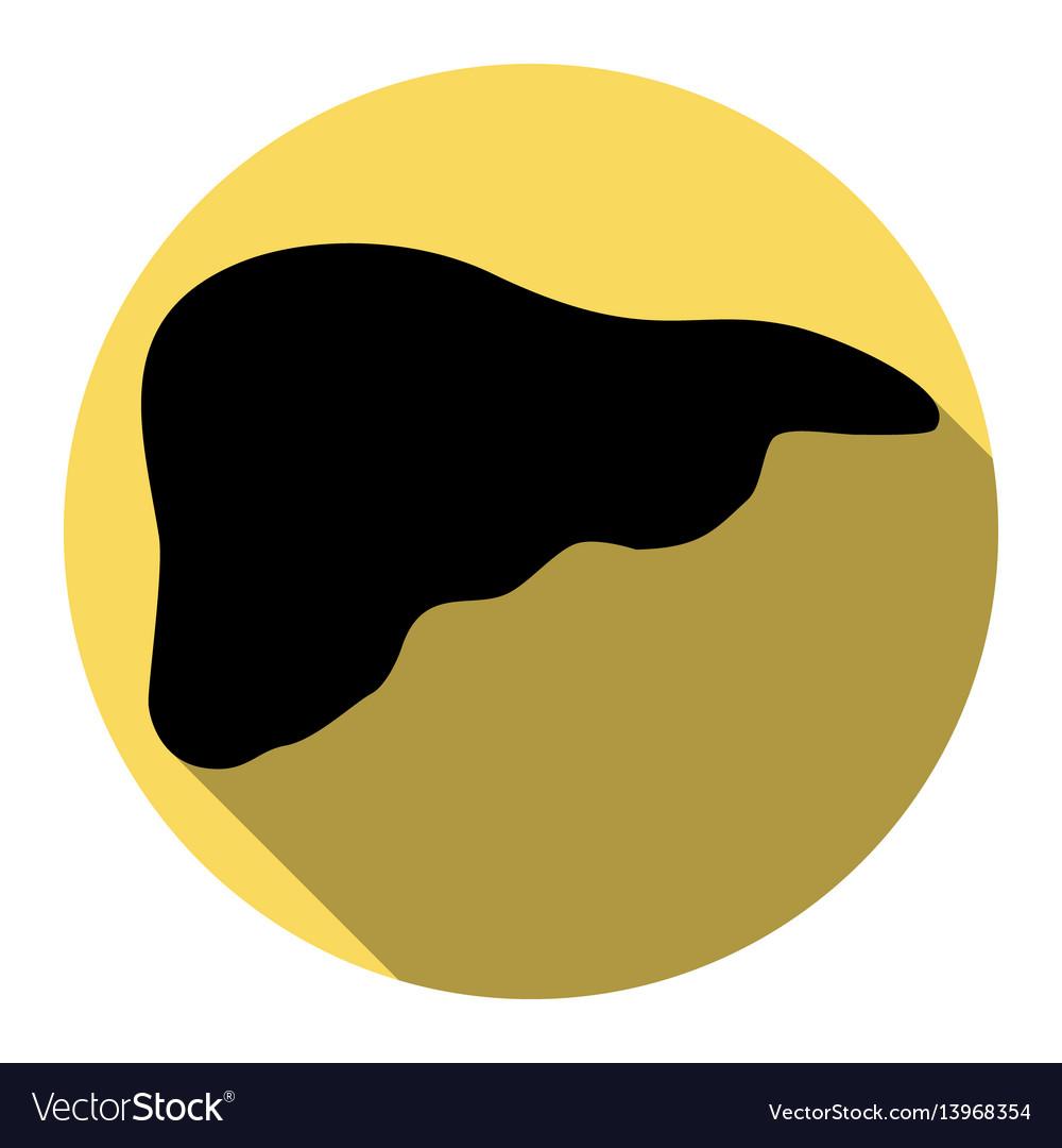 Human anatomy liver sign vector image