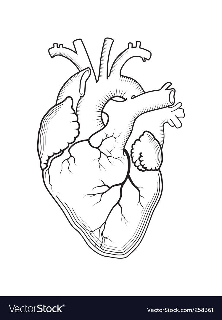 Heart Outline Version Vector. Artist: Lazzardo; File type: Vector EPS