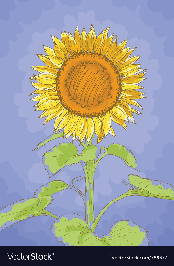Sunflower and blue sky vector image
