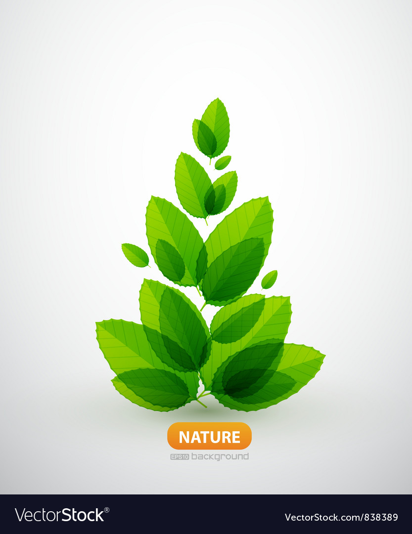 Green leaf summer tree vector image