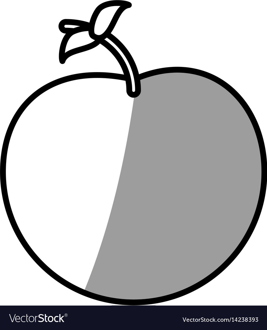 Apple fruit picnic shadow vector image