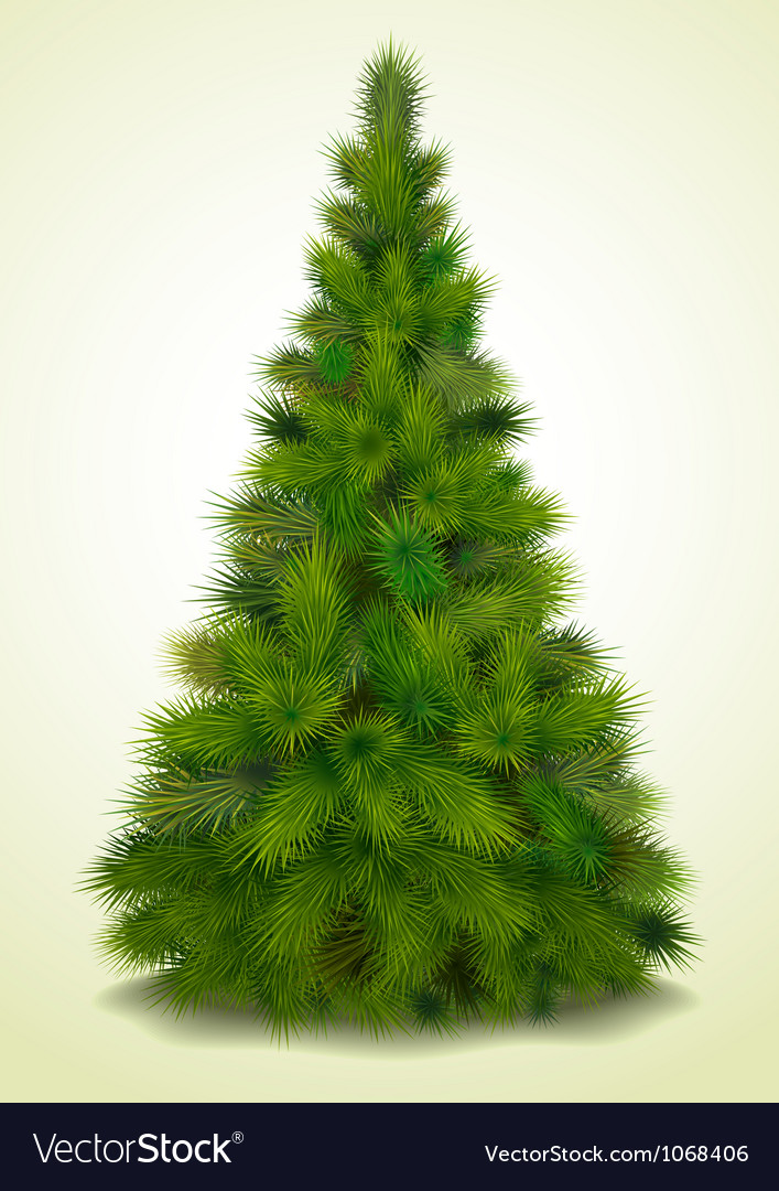 Compare Christmas Tree Prices
