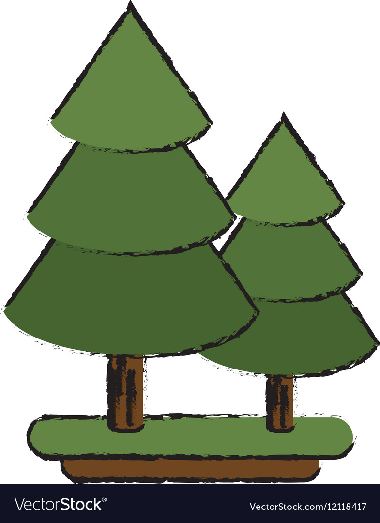 the pine tree u0026 state vector images 24