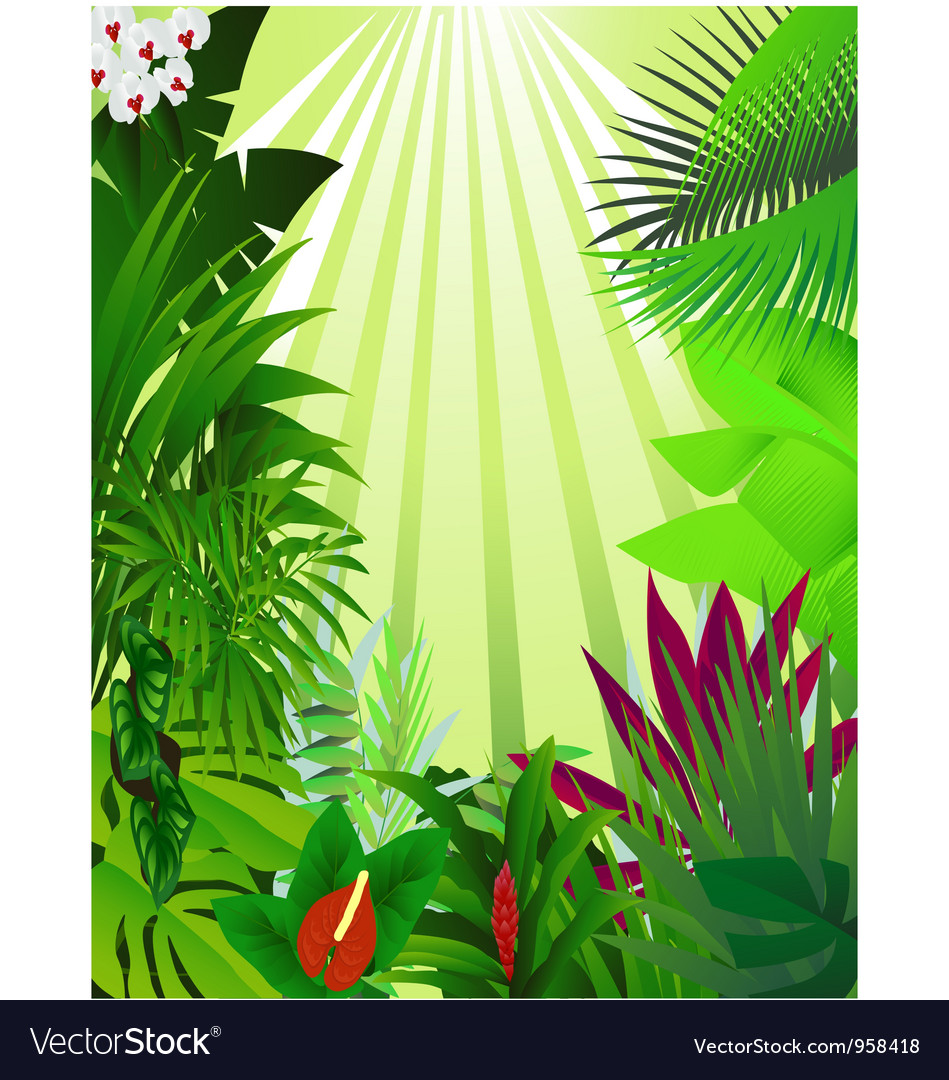 Nature forest background vector image