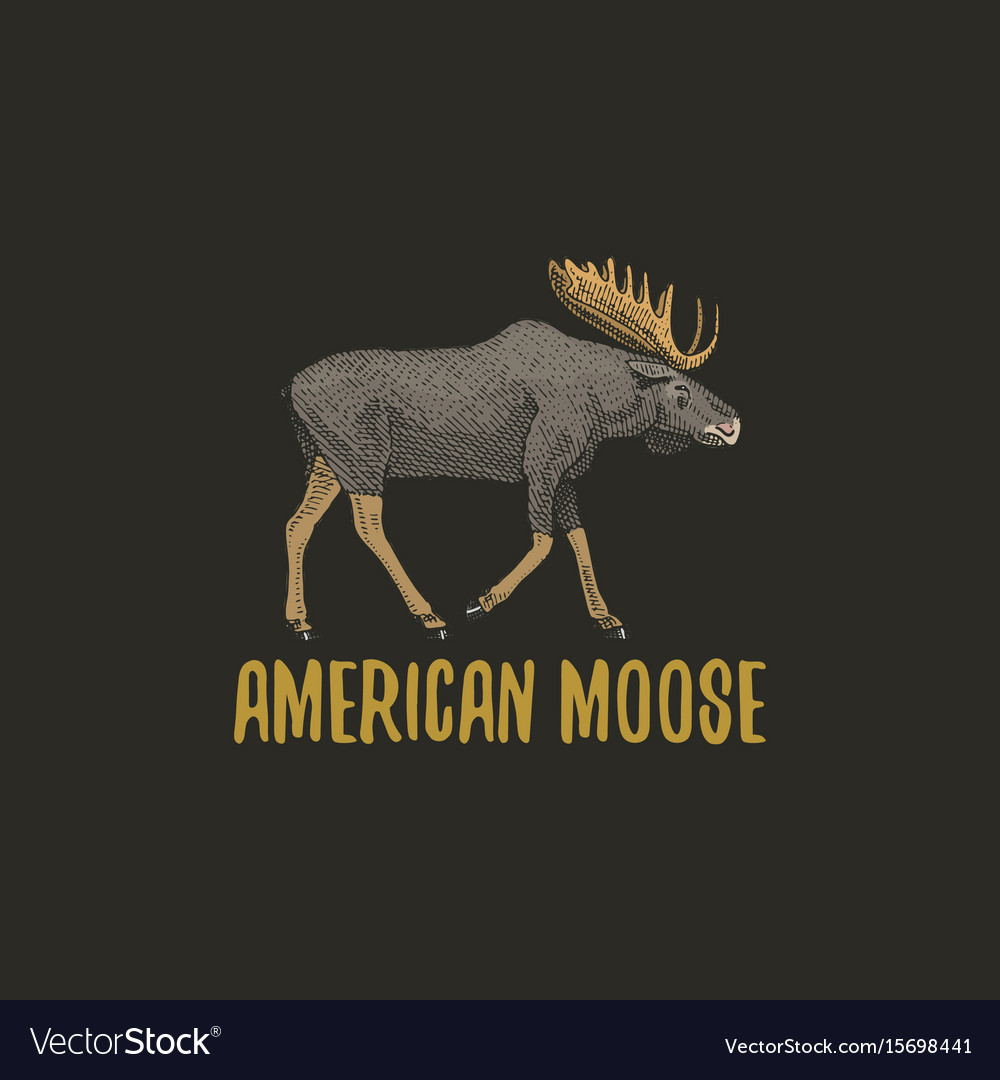 American moose or eurasian elk engraved hand drawn vector image