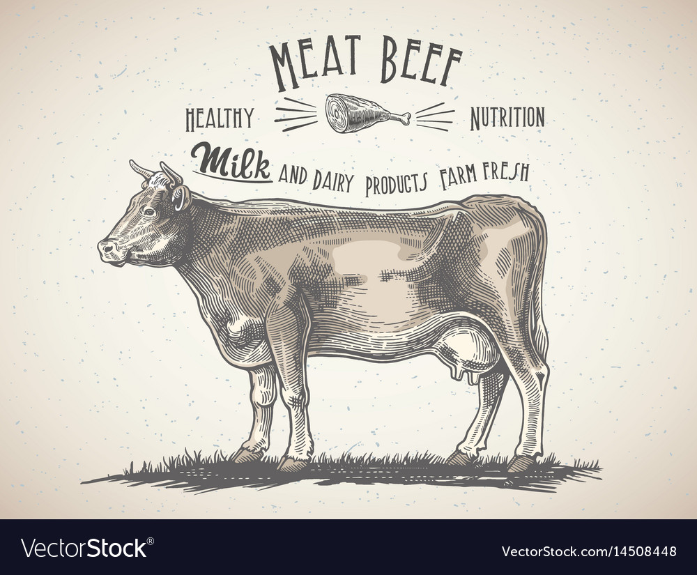 Cow in graphic style and inscriptions drawing by vector image