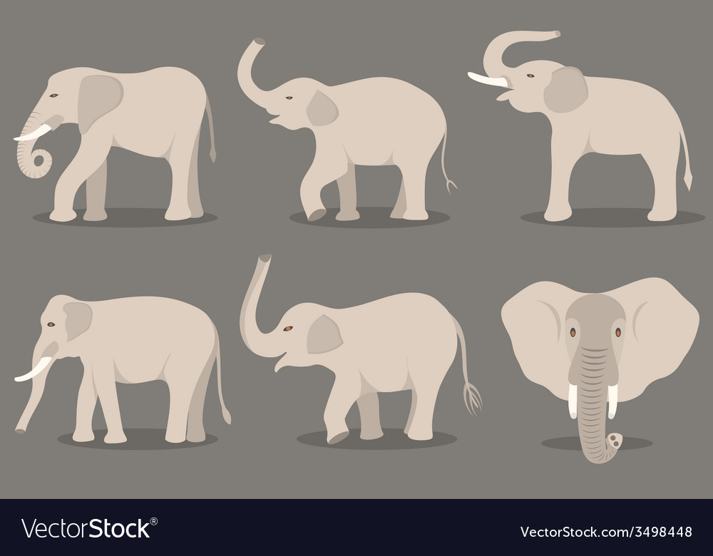 White elephant set vector image