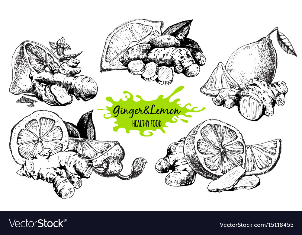 Ginger and lemon vector image