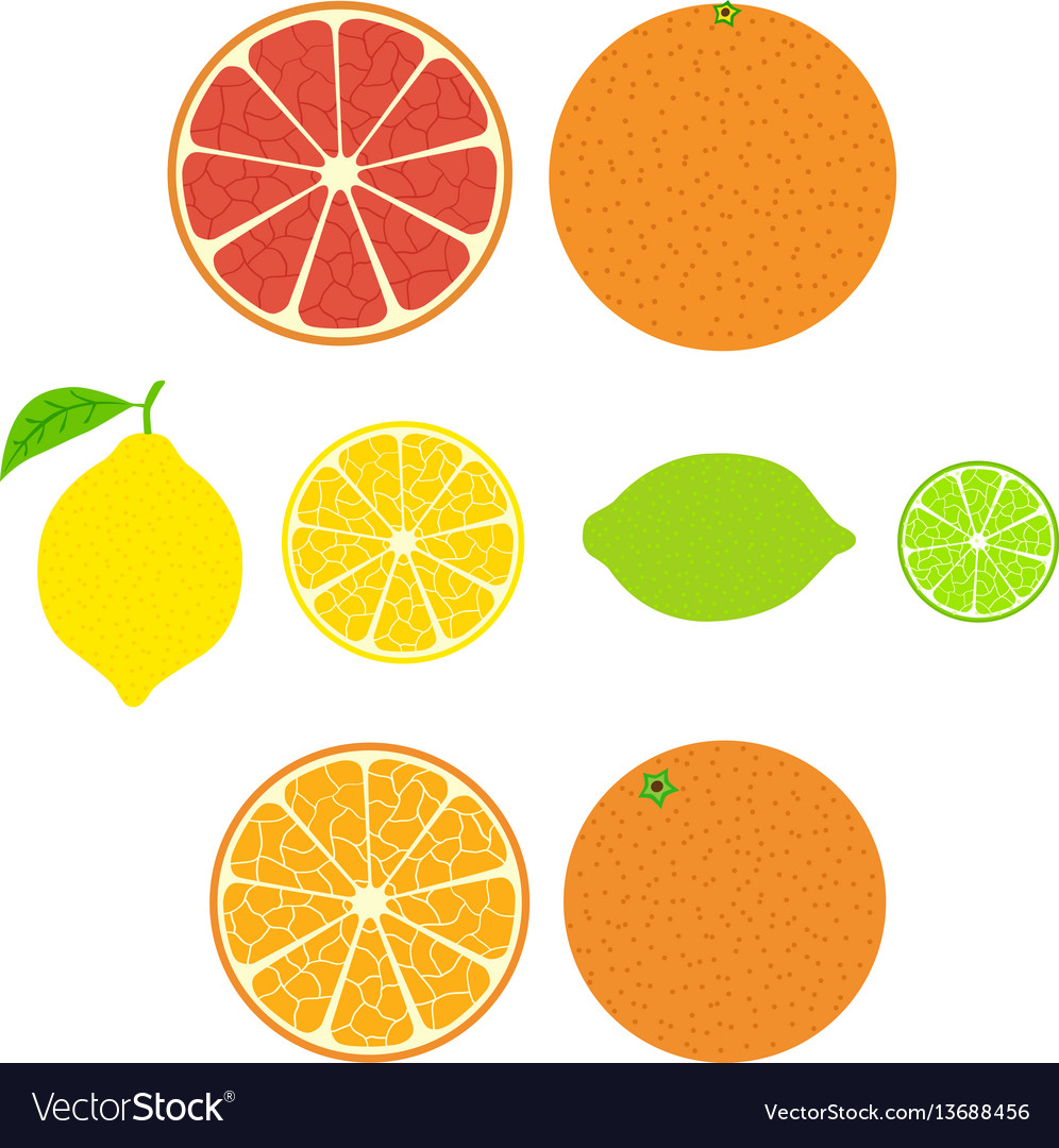 Collection of citrus slices of orange lemon lime vector image