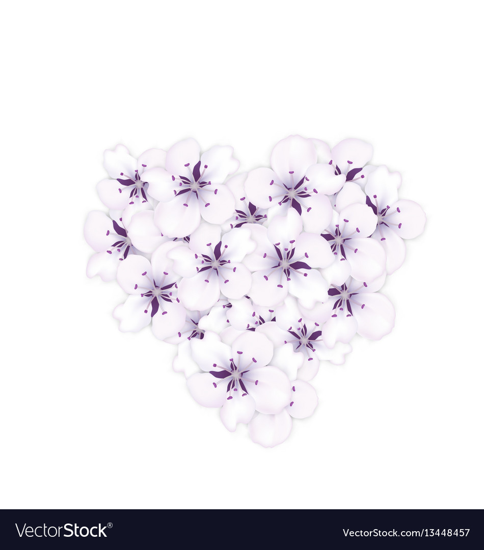 Blooming bouquet sakura blue flowers in shape vector image
