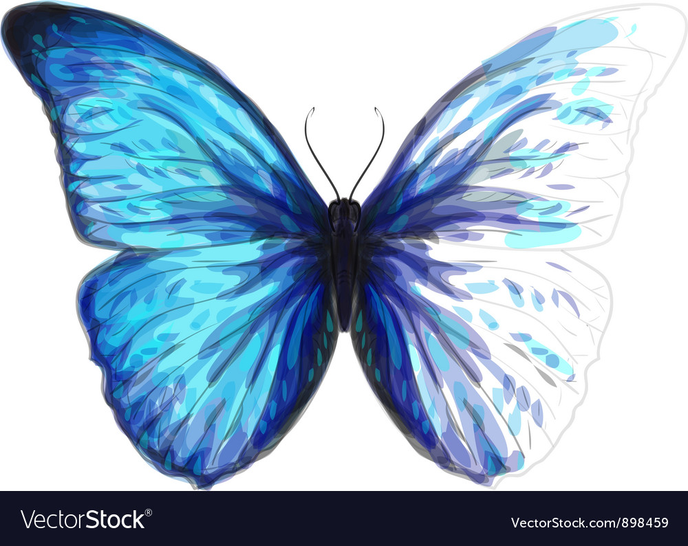 Butterfly Morpho Anaxibia vector image