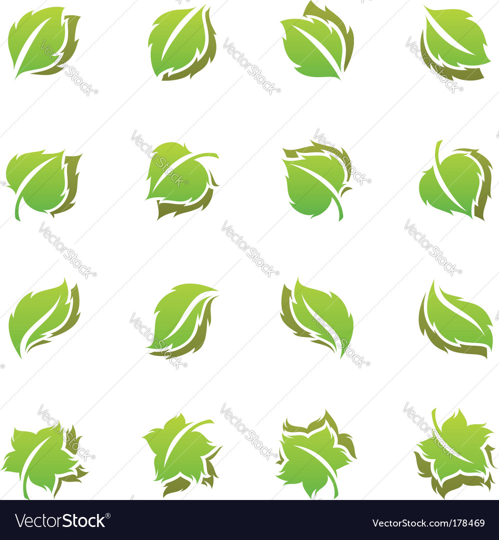 Leaves template set vector image