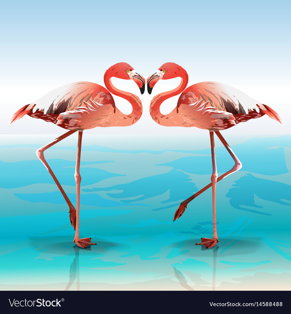 Two flamingos vector image
