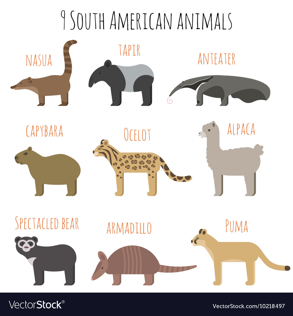 Set of South American animals icons vector image