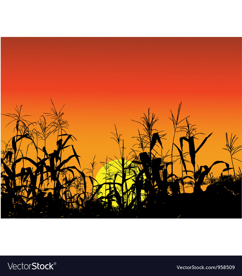 Corn silhouette background vector image