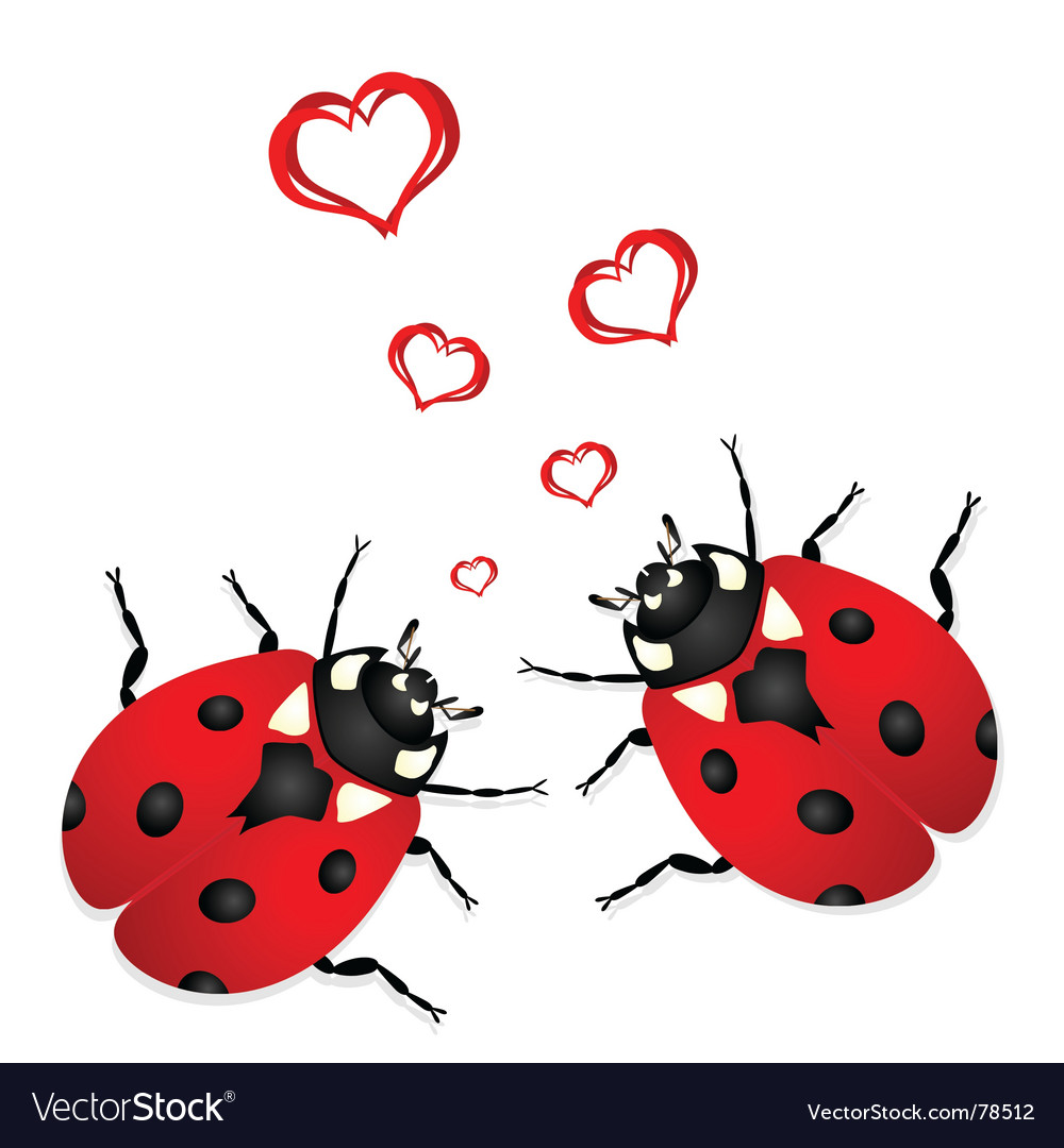 Lady bugs in love vector image