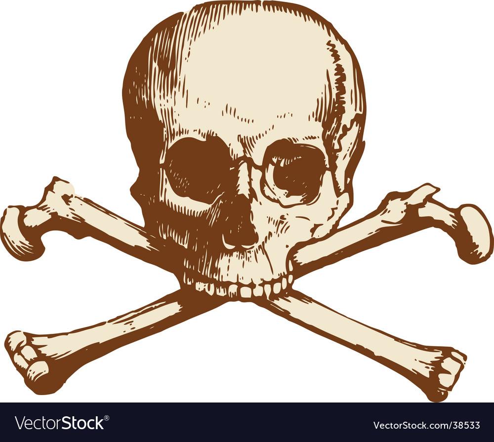 Skull and cross bones vector image