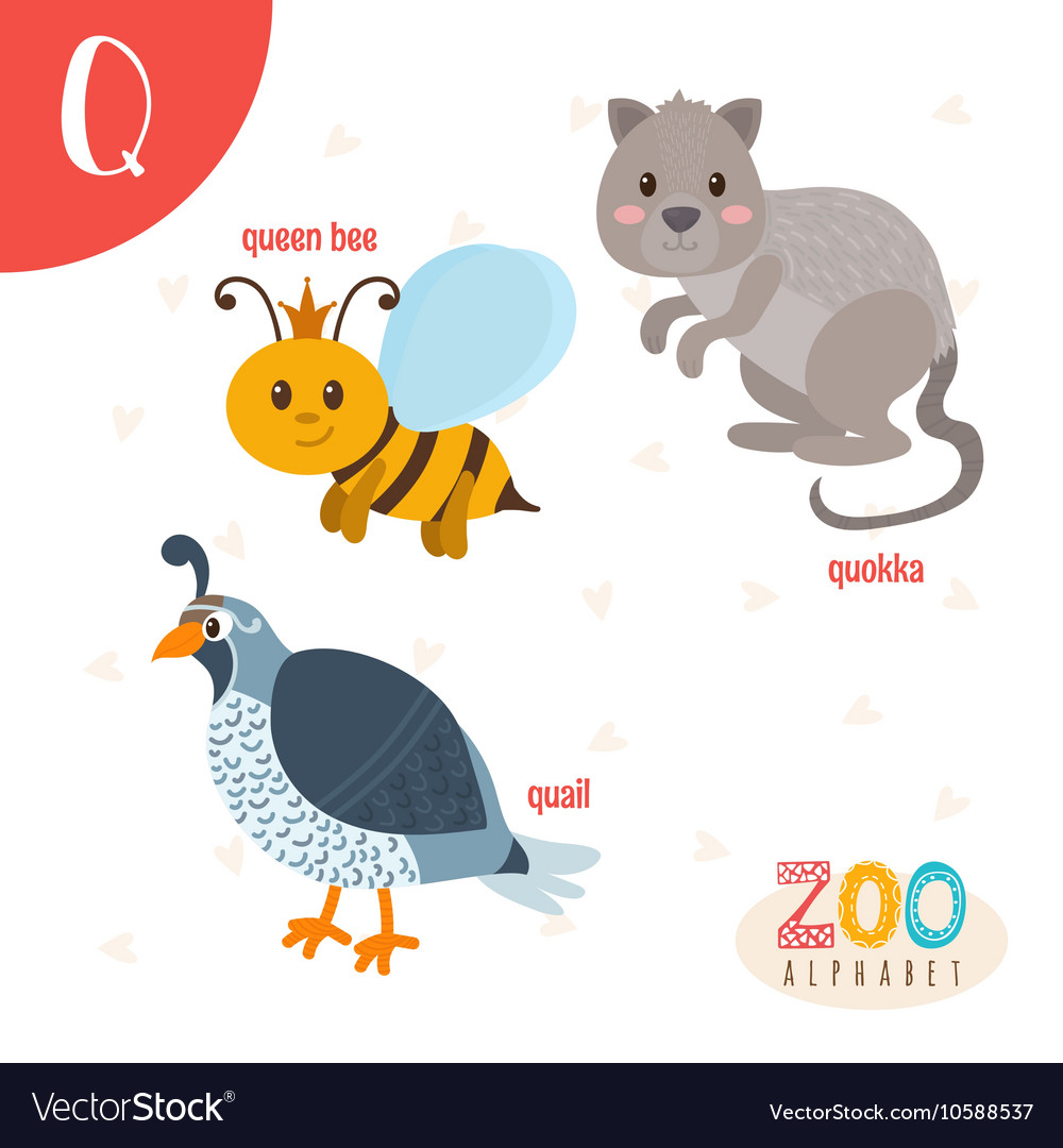 animals that start with the letter q inspirational animal with letter q cover letter examples 20191