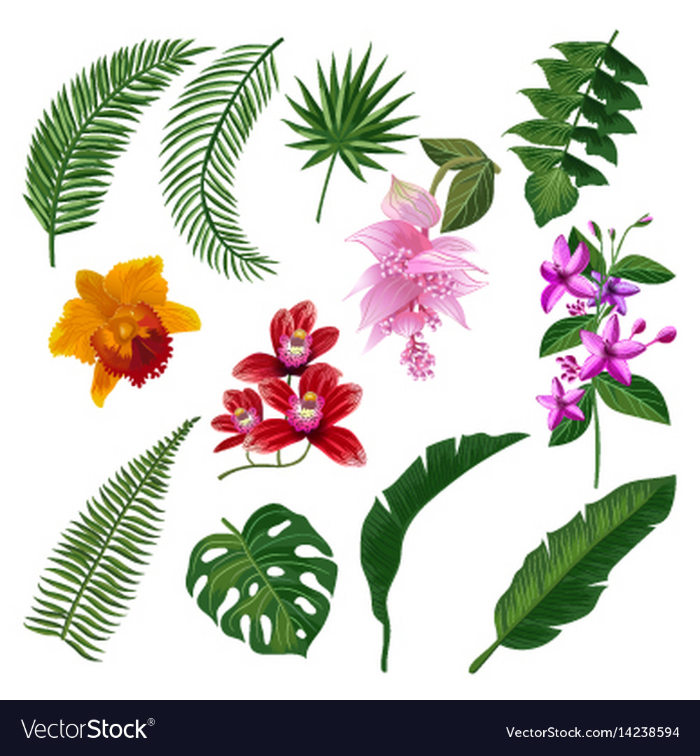 Set of tropical flowers bouquet royalty free vector image set of tropical flowers bouquet vector image izmirmasajfo Gallery
