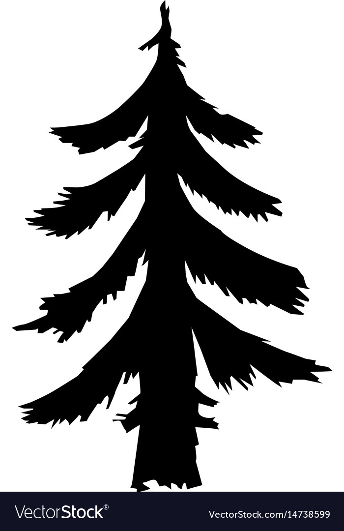Fir forest motive vector image