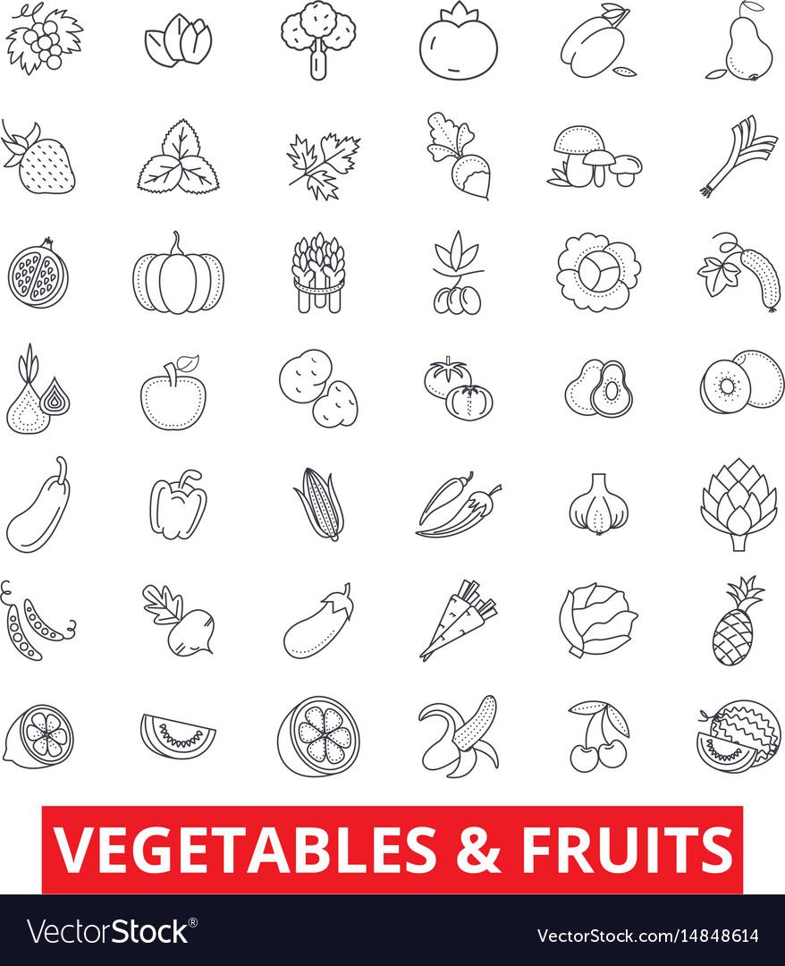 Vegetables mixed fruits garden food fresh vector image