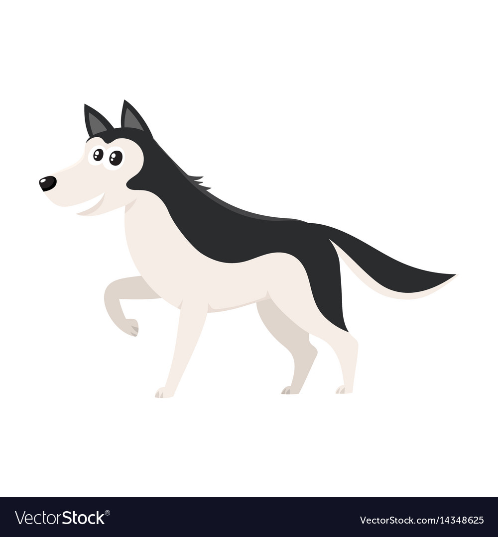 Cute black and white husky dog character with vector image