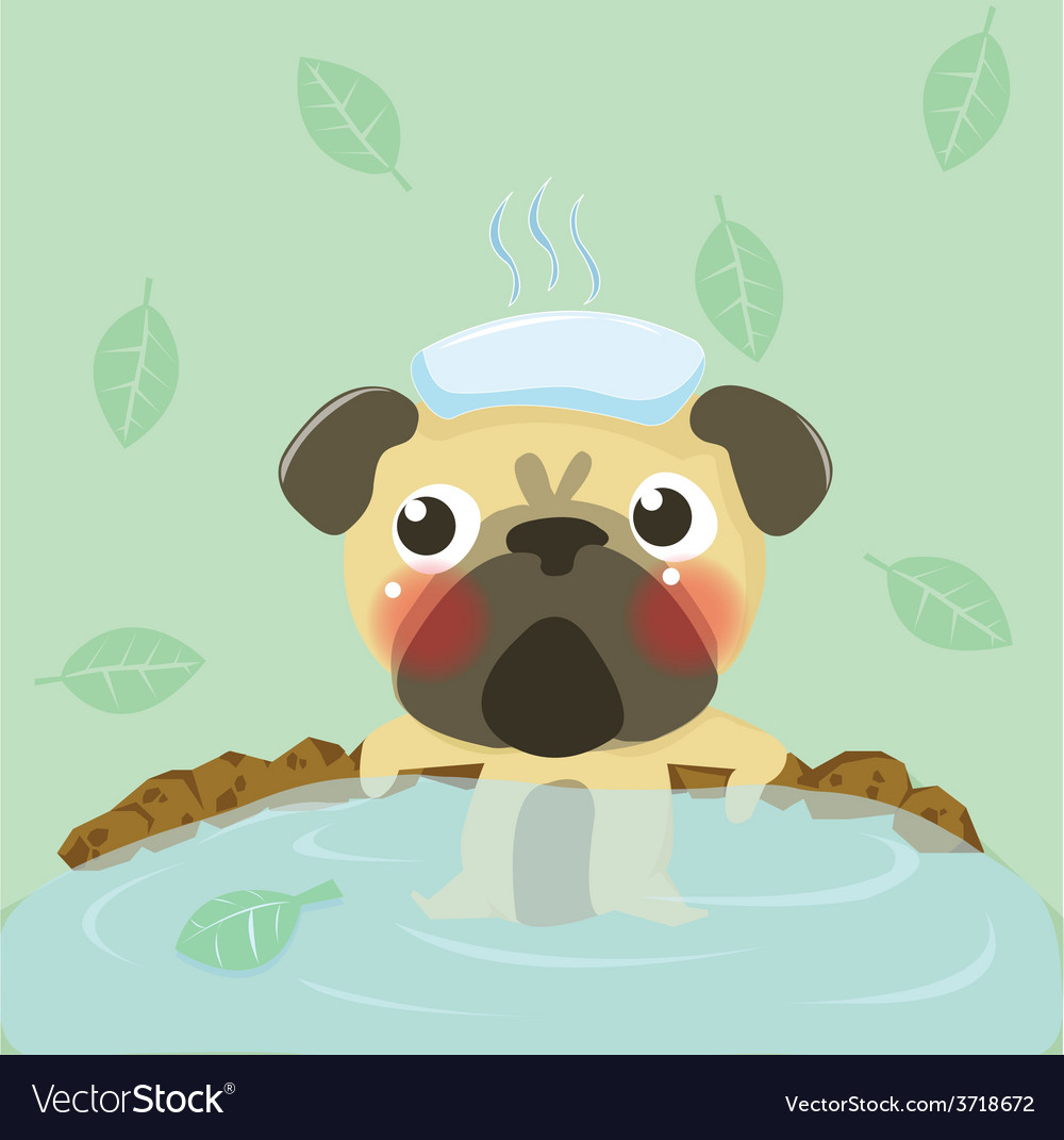 Pug relax in warm water vector image