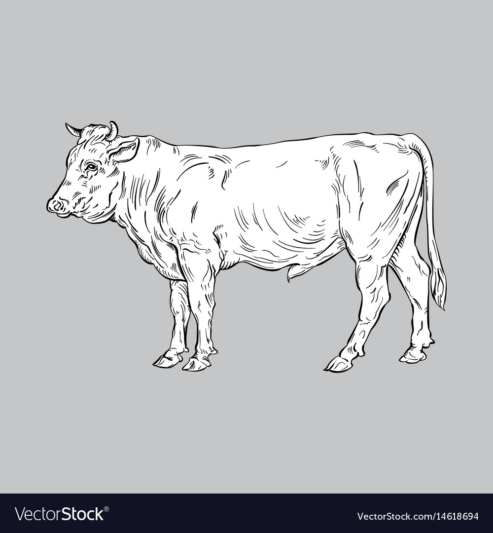 Bull line art vector image