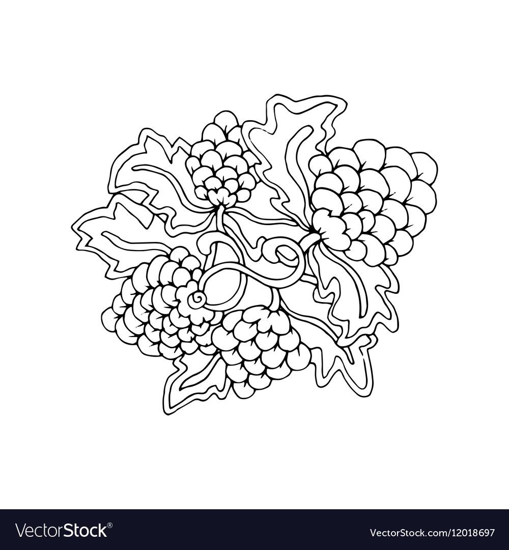 Hand drawn doodle outline grape fruit magic line vector image