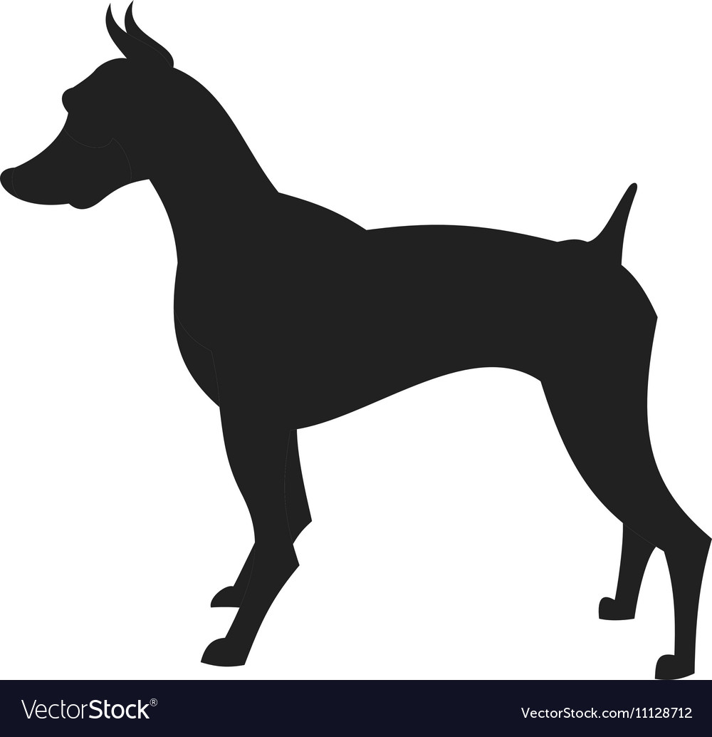 black male doberman silhouette vector image