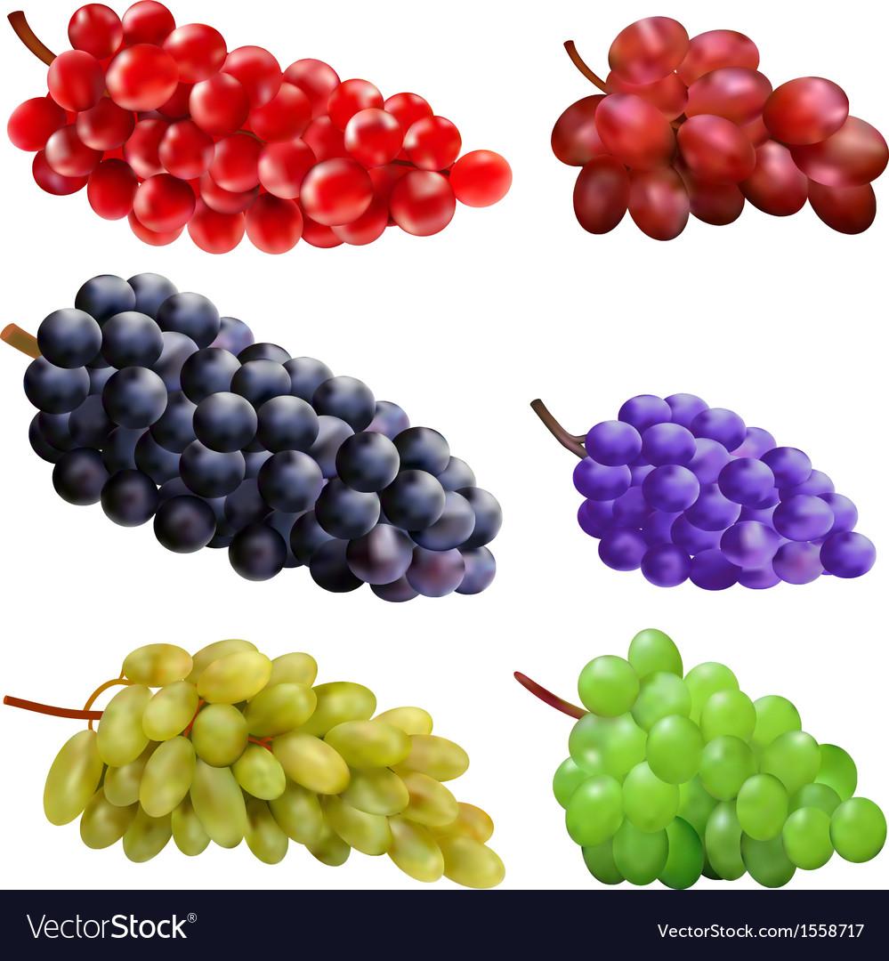 Set of grapes vector image
