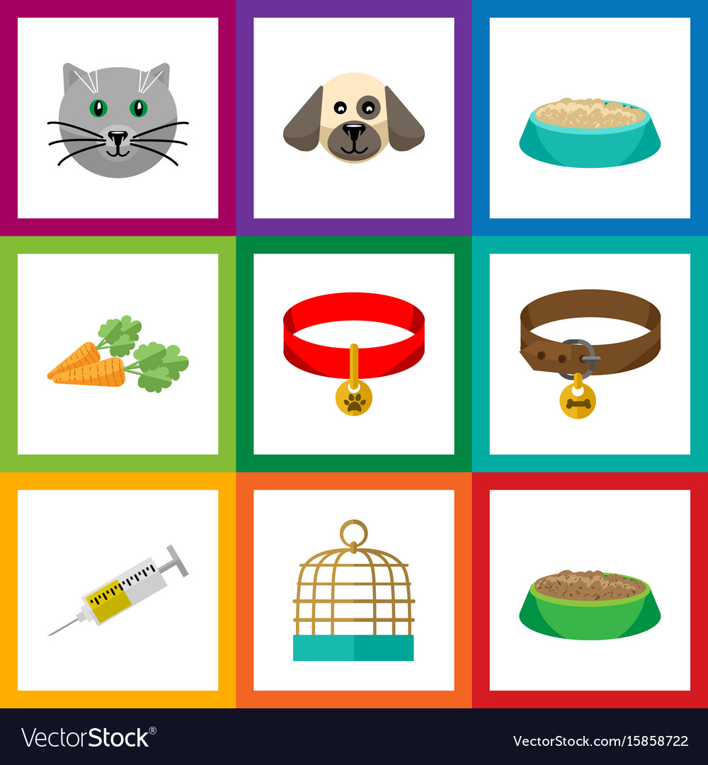 Flat icon animal set of vaccine kitty collar vector image
