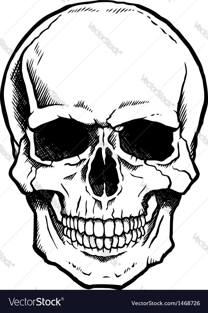 Black and white human skull with jaw vector image