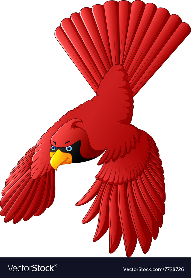 Flying cardinal bird vector image