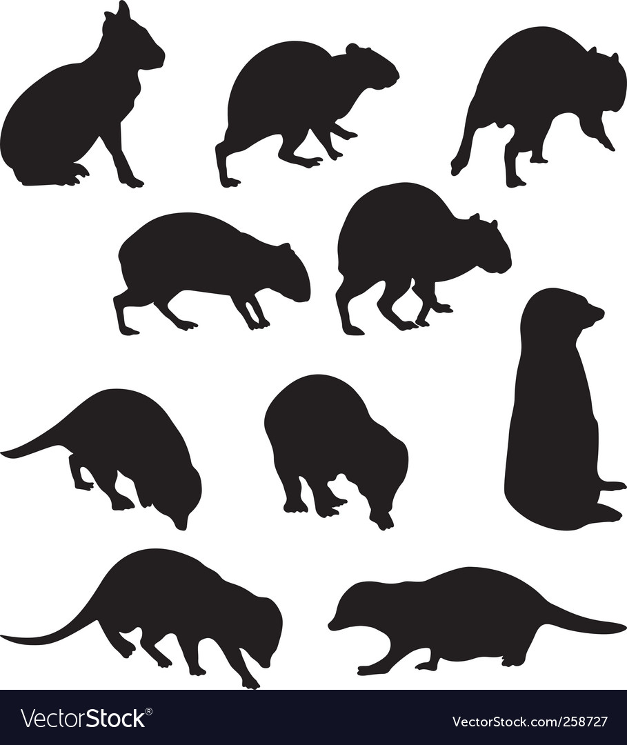Agoutis and seriate vector image