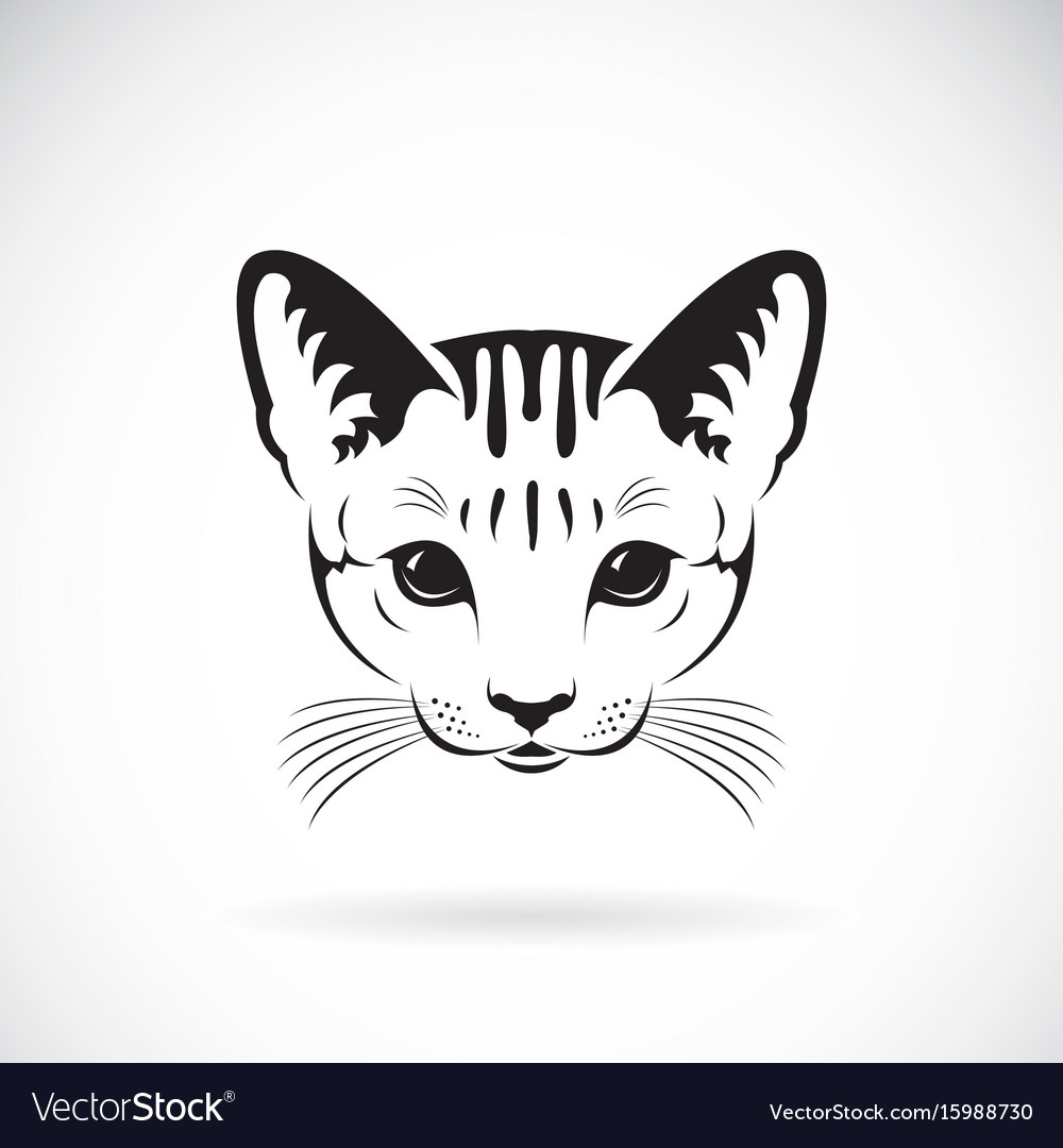 Cat face on white background pet animals vector image