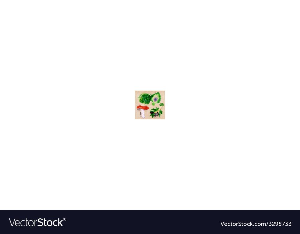 Vegetables watercolor rotkappe artichokes black vector image