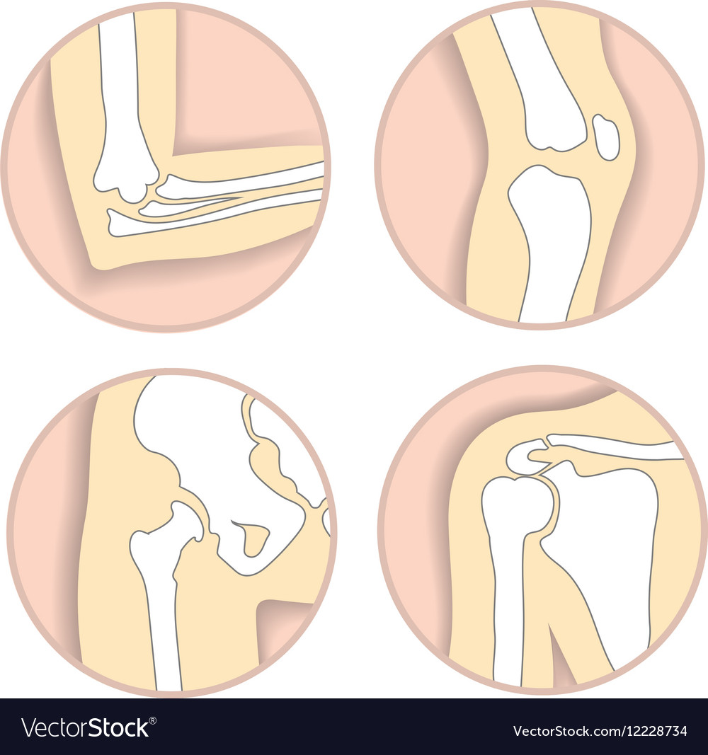 Set of human joints elbow knee hip joint vector image