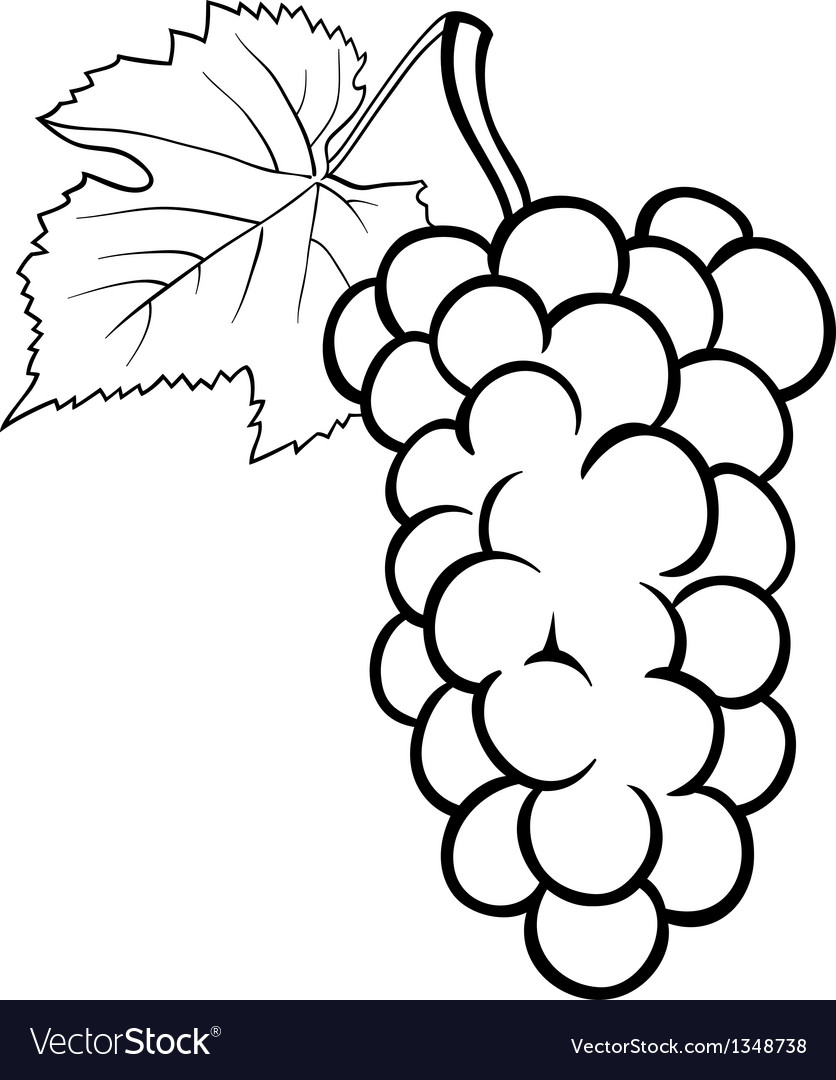 Grapes For Coloring Book Vector Image