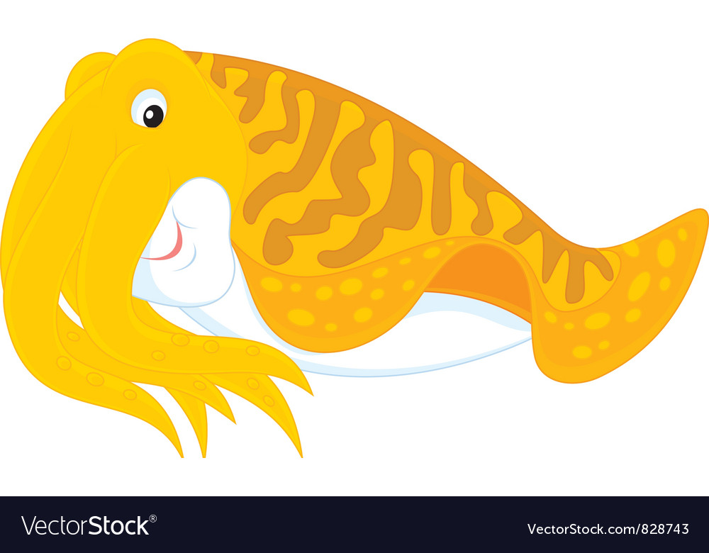 Cuttlefish vector image