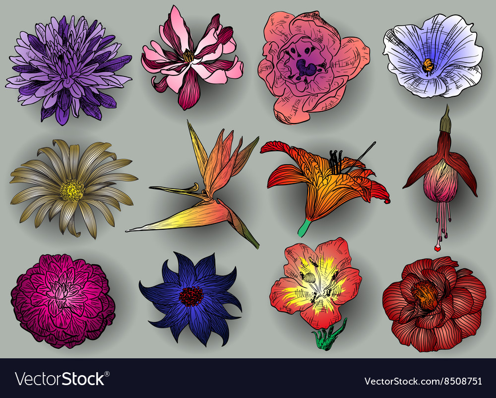 Colorful Sketch of Flowers Set vector image