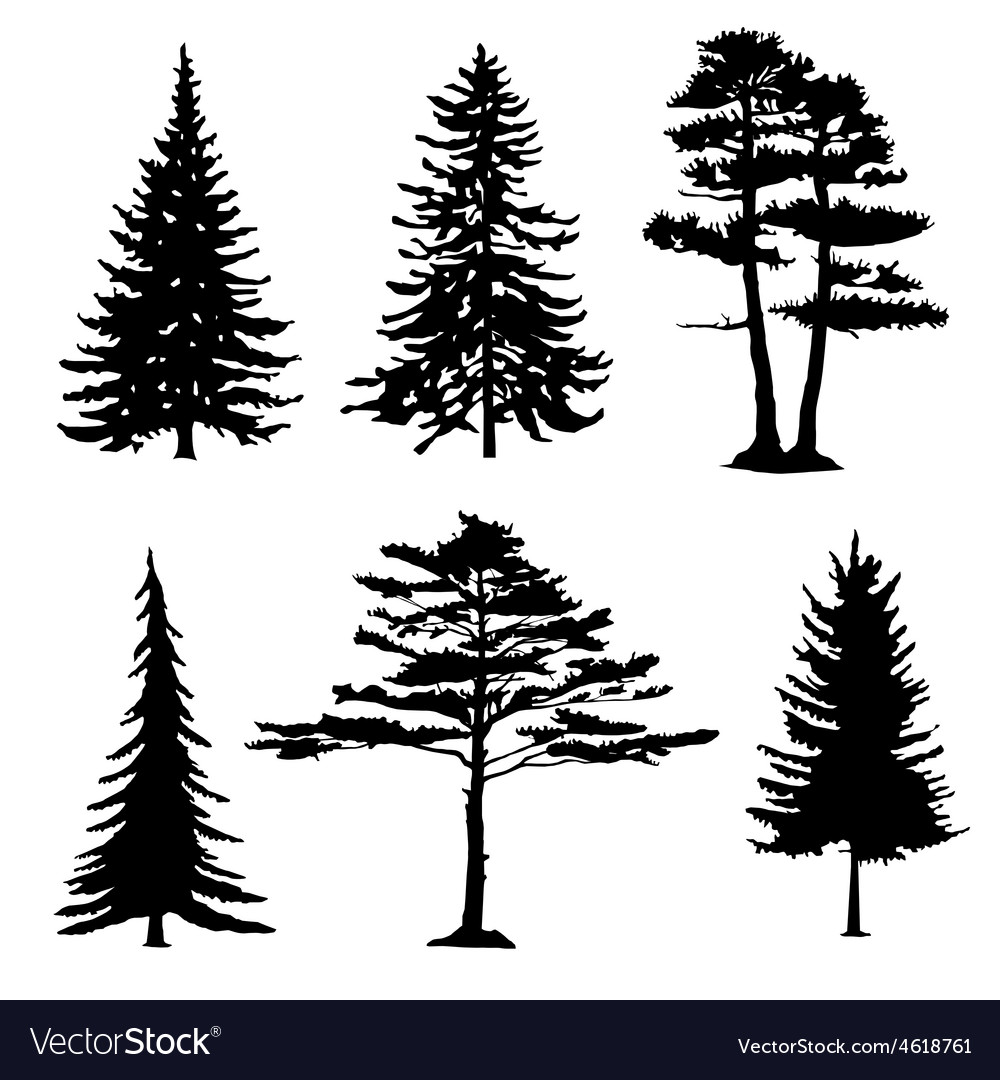 Coniferous trees silhouettes collection vector image