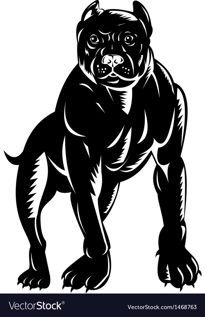 Pitbull dog vector image