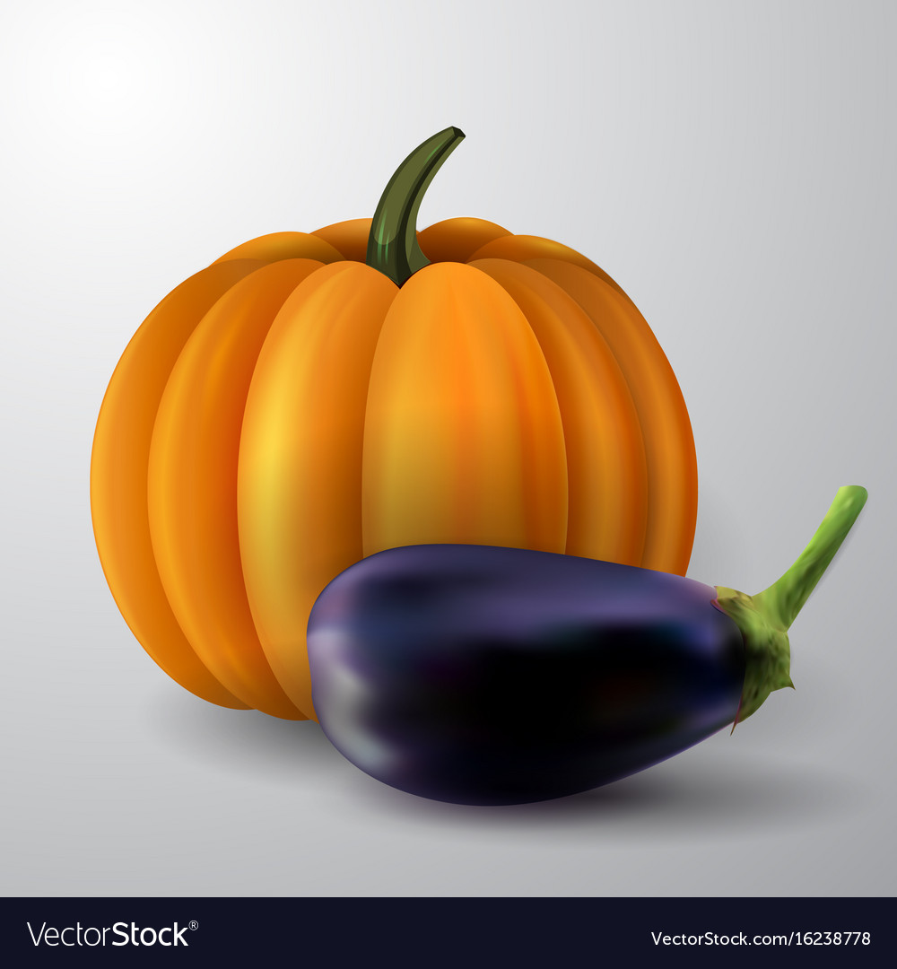 Pumpkin and eggplant vector image