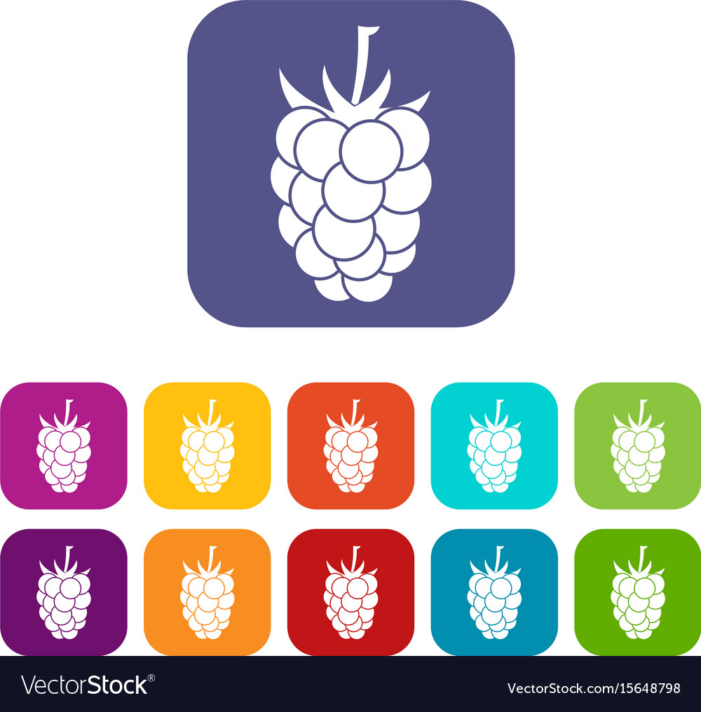 Blackberry fruit icons set flat vector image
